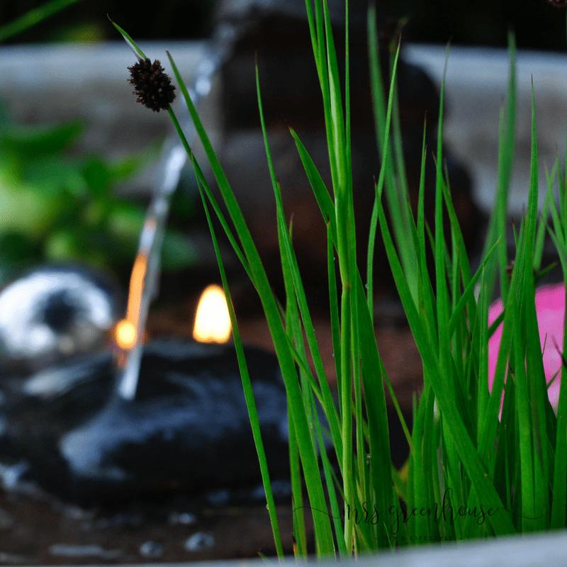 Binsen im Mini-Teich - Garten DIY