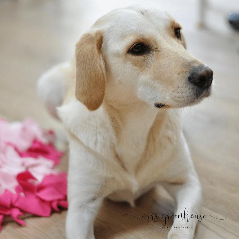 Schnüffelteppich für den Hund selbermachen