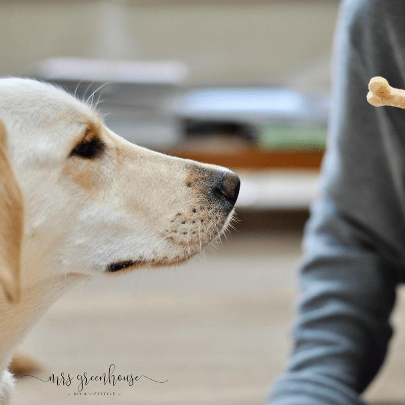 Blechdosen upcycling & Cookies für den Hund