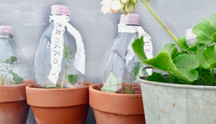 Mini-Greenhouse in 5 Minuten selbermachen