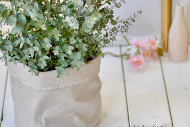 Neuer Pflanztopf für den Eukalyptus - ein DIY aus SnapPap