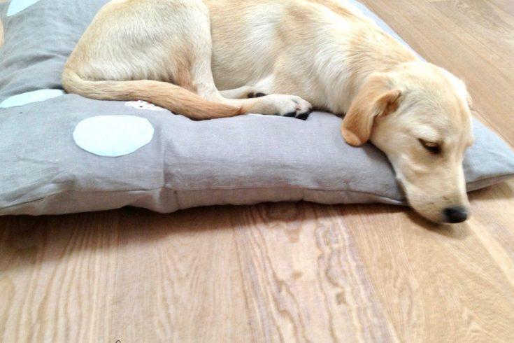 DIY für ein Hundekissen
