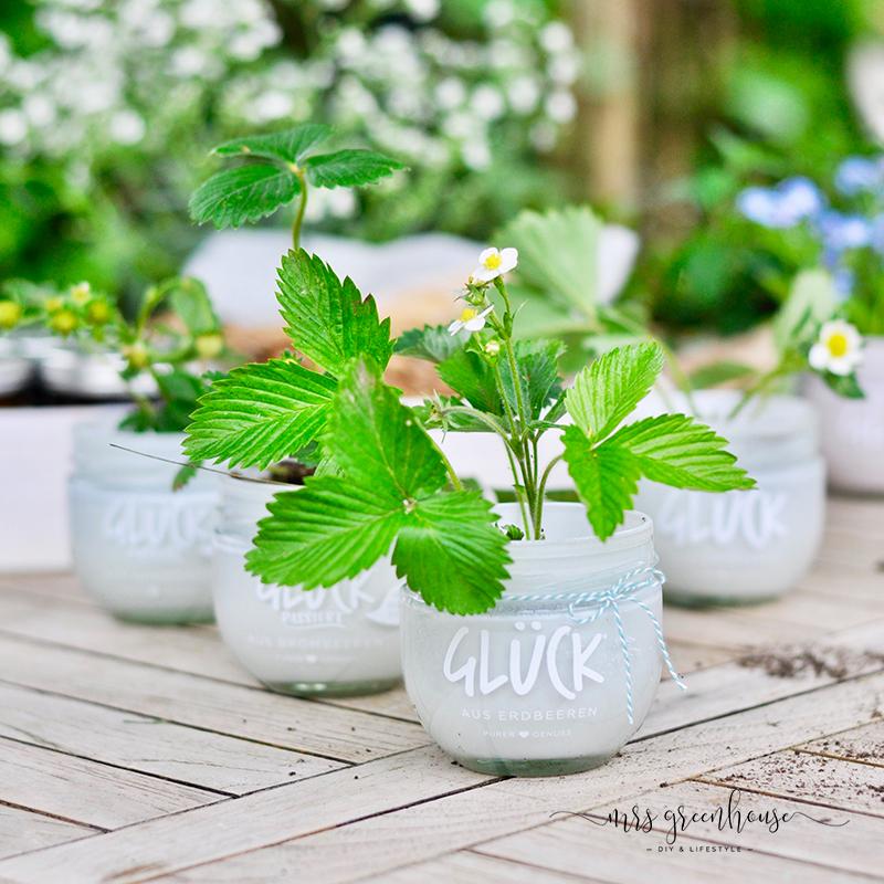Gläser mit Erdbeeren bepflanzt
