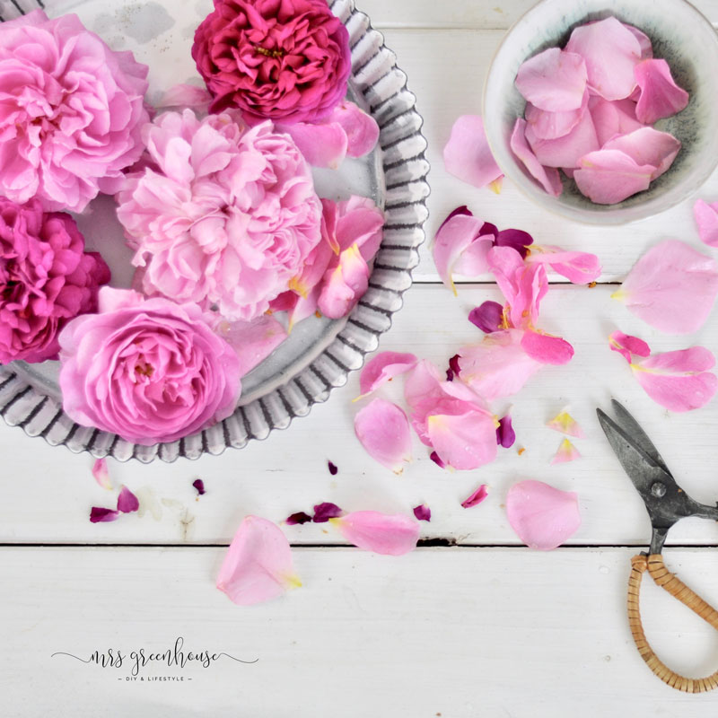 Rosenblüten für Rosenblütenzucker Rezept