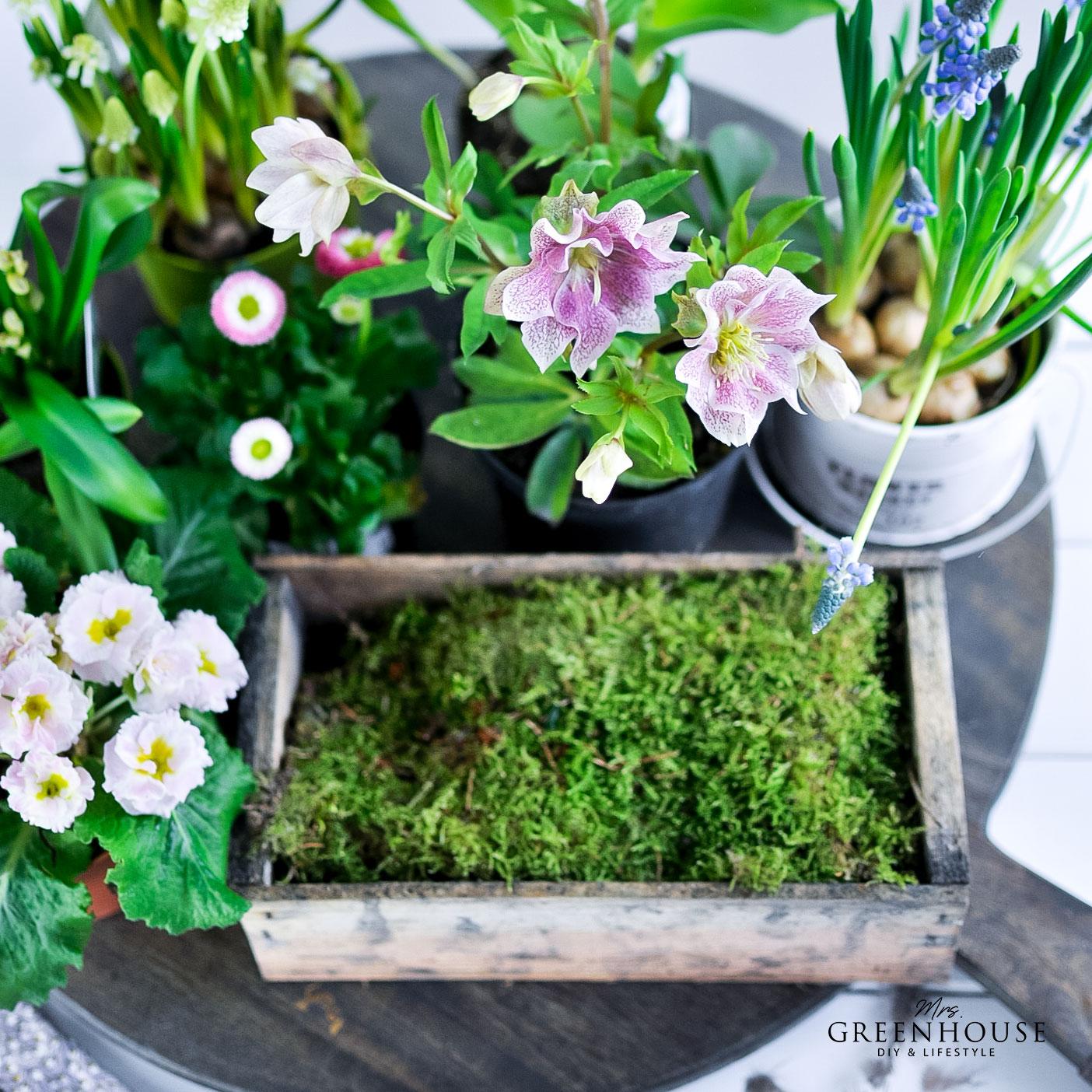 Blumen für Ziegelform