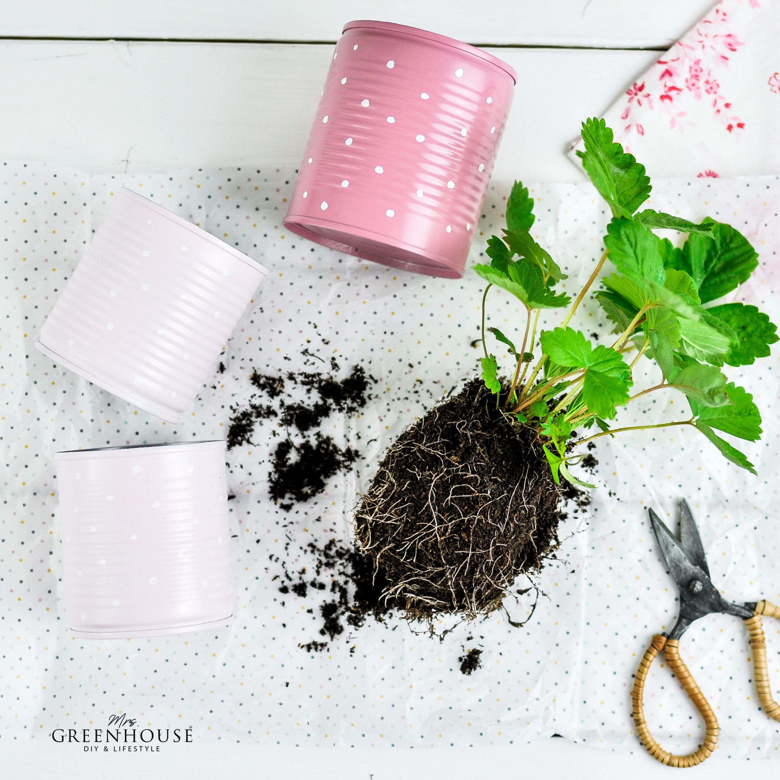 Dosen Upcycling im Erdbeer Design