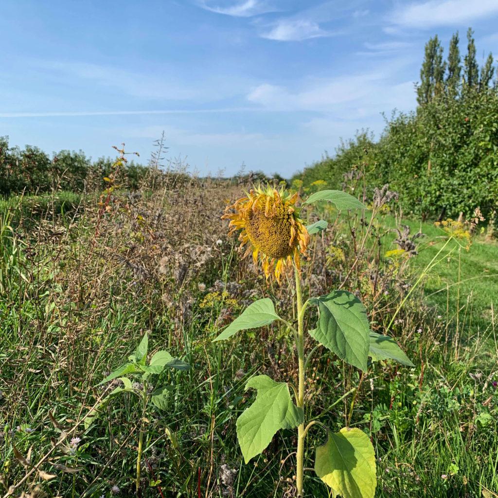 Biotope im Alten Land